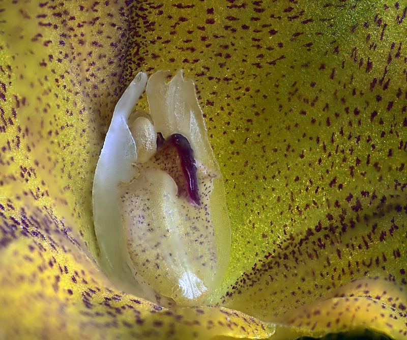 Miniatur-Orchideen Teil 5 - Seite 40 _103dd10