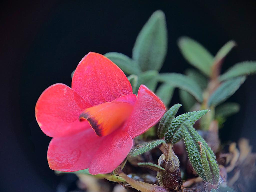 Miniatur-Orchideen Teil 5 - Seite 6 Cuthbe10