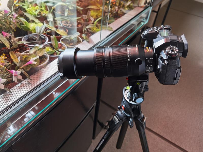 Makrofotografie von Orchideenblüten, kurze allgemeine Anleitung Img_2208