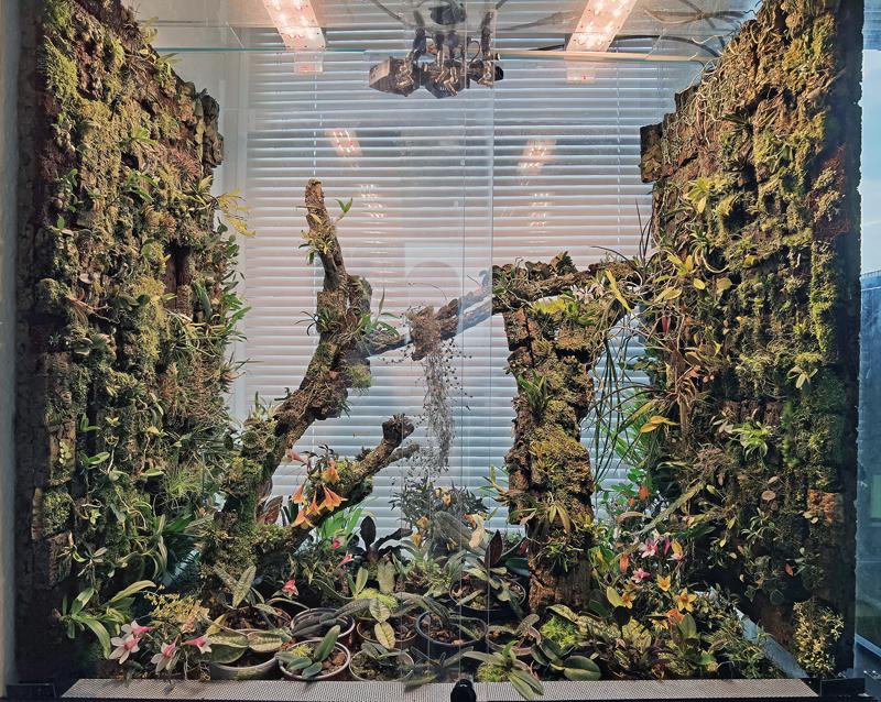 Makrofotografie von Orchideenblüten, kurze allgemeine Anleitung Img_2210