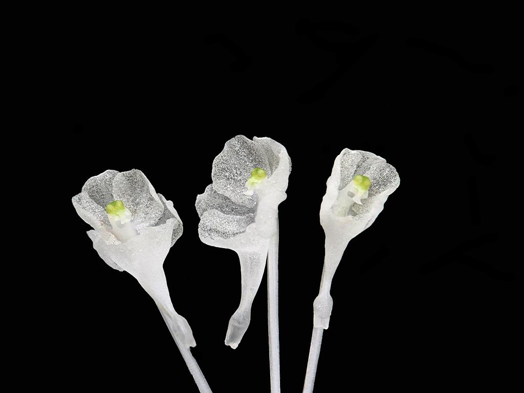 Miniatur-Orchideen Teil 5 - Seite 6 P1001810