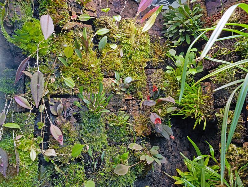 Miniatur-Orchideen Teil 6 P1050910