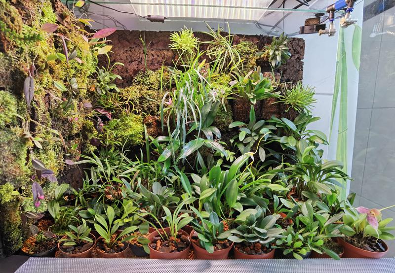 Vitrinen für Miniaturorchideen Tk410