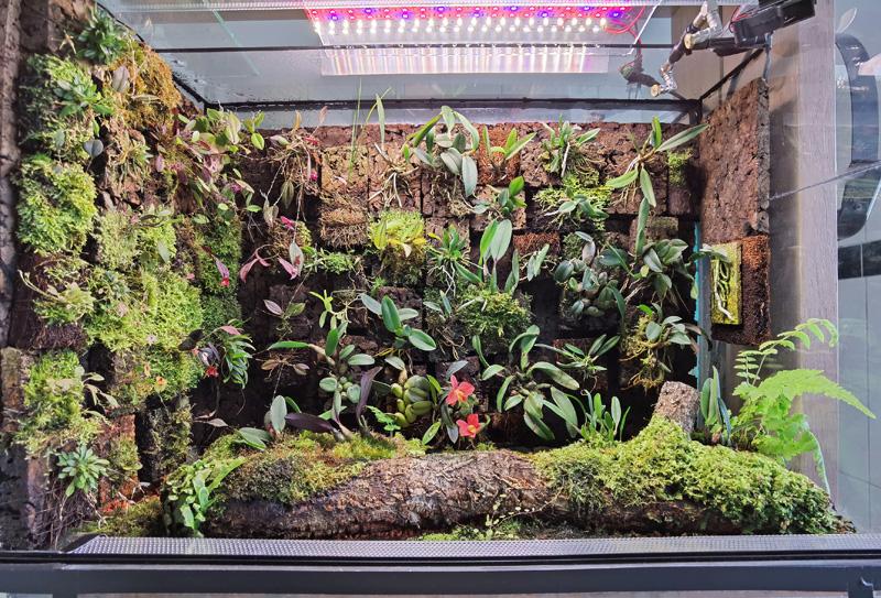 Vitrinen für Miniaturorchideen Tk5g10