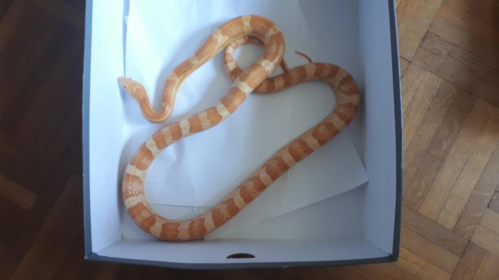 J'ai sauvé un serpent mais maintenant je dois lui trouver un foyer 20190811