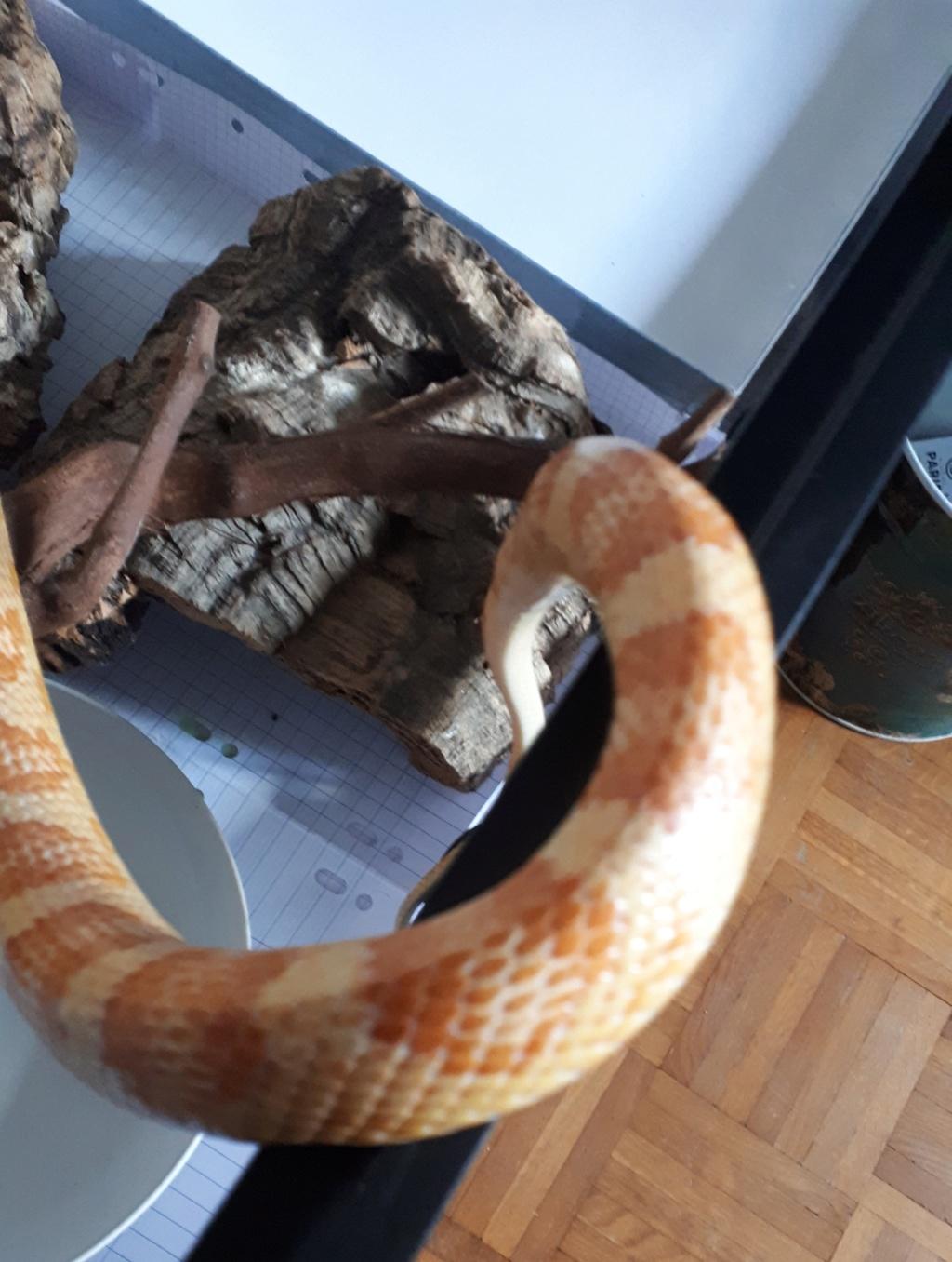 J'ai sauvé un serpent mais maintenant je dois lui trouver un foyer 20190814