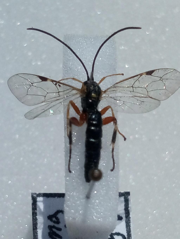 hymenoptere Img_2011