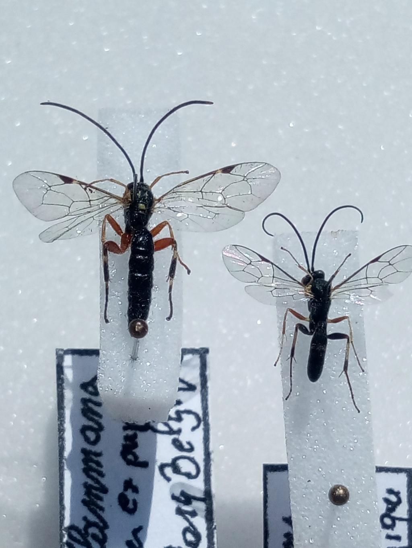 hymenoptere Img_2012