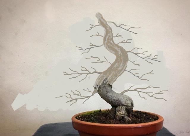 Diseño de un bonsai. Visión de futuro. 15894610