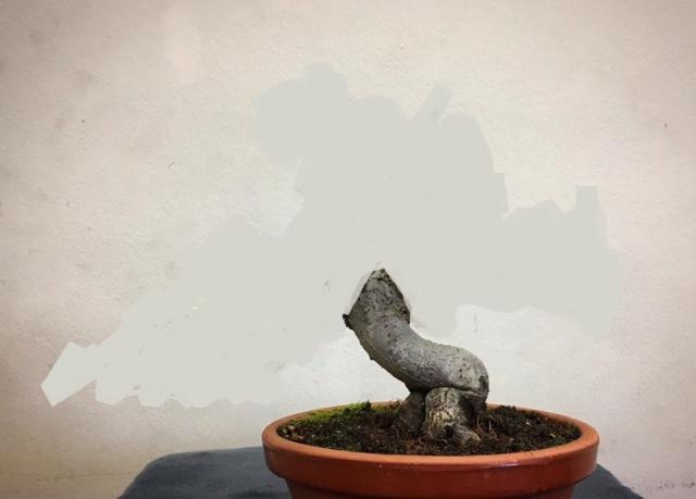Diseño de un bonsai. Visión de futuro. 15894611