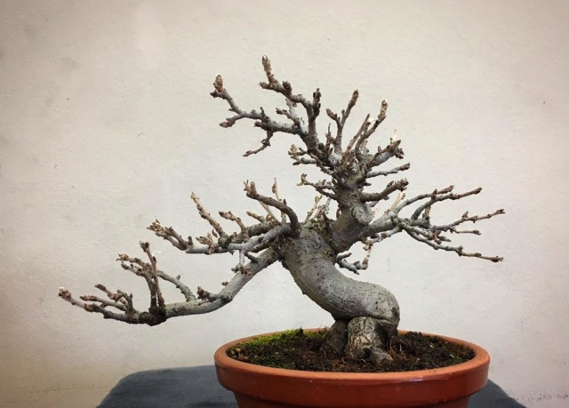 Diseño de un bonsai. Visión de futuro. 15894612