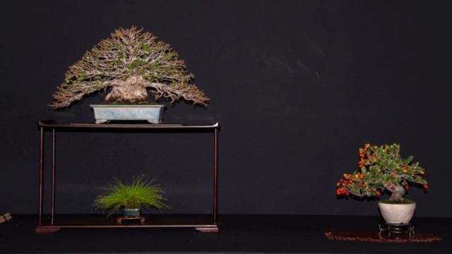 Diseño de un bonsai. Visión de futuro. 22528510