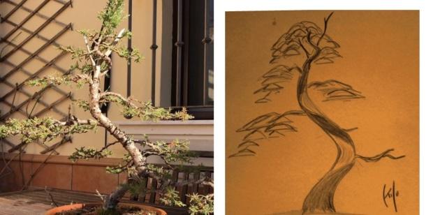 Diseño de un bonsai. Visión de futuro. 902a8f11