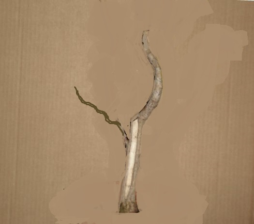 Diseño de un bonsai. Visión de futuro. - Página 2 Cimg0211