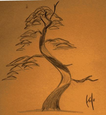 Diseño de un bonsai. Visión de futuro. Cimg1610
