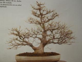 Diseño de un bonsai. Visión de futuro. Dscf1515