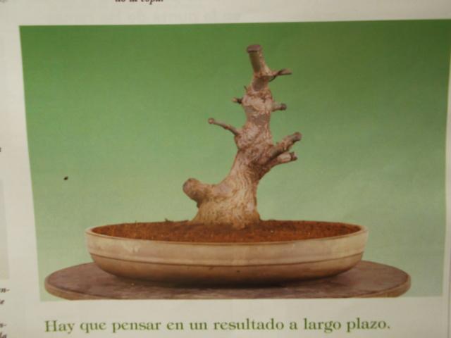 Diseño de un bonsai. Visión de futuro. Dscf1517