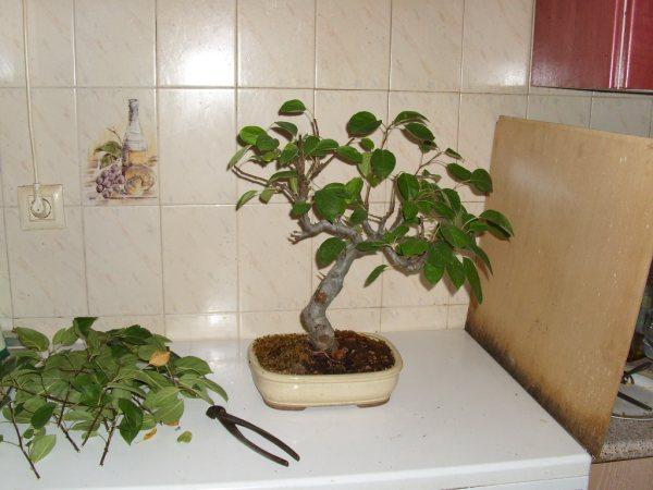 ¿Cómo se consigue hacer este tipo de ramas? Dsci0510