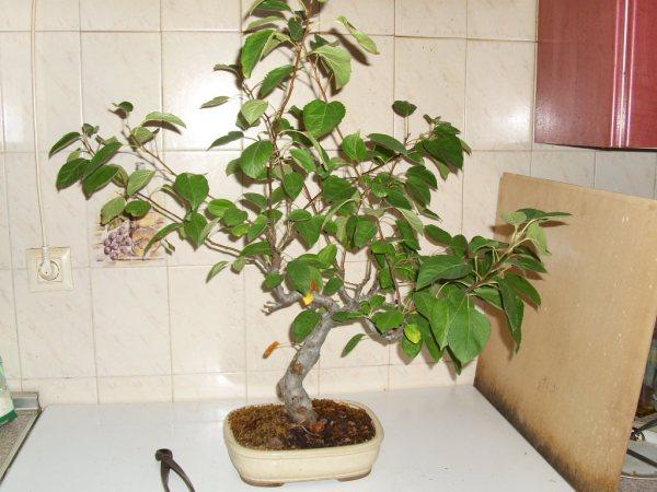 ¿Cómo se consigue hacer este tipo de ramas? Dsci0511