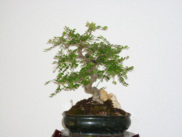 ¿Cómo se consigue hacer este tipo de ramas? Dsci0514