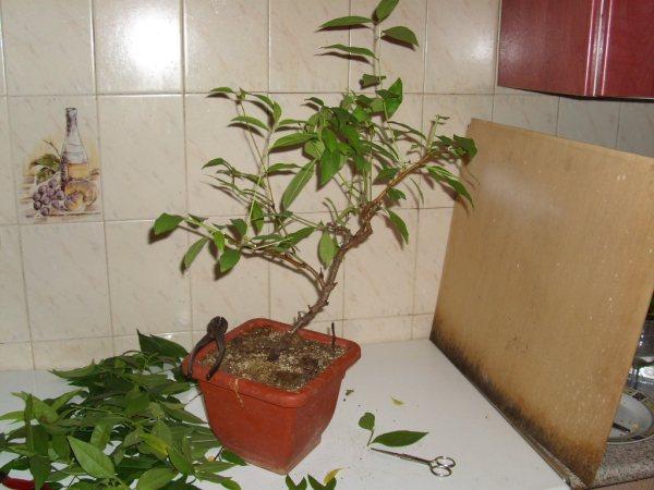 ¿Cómo se consigue hacer este tipo de ramas? Dsci0517