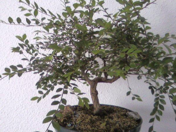 ¿Cómo se consigue hacer este tipo de ramas? Foto0111