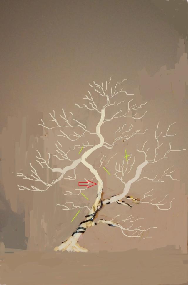 Diseño de un bonsai. Visión de futuro. - Página 2 Img_2024