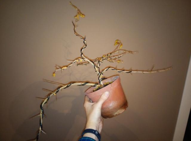 Diseño de un bonsai. Visión de futuro. - Página 2 Img_2025