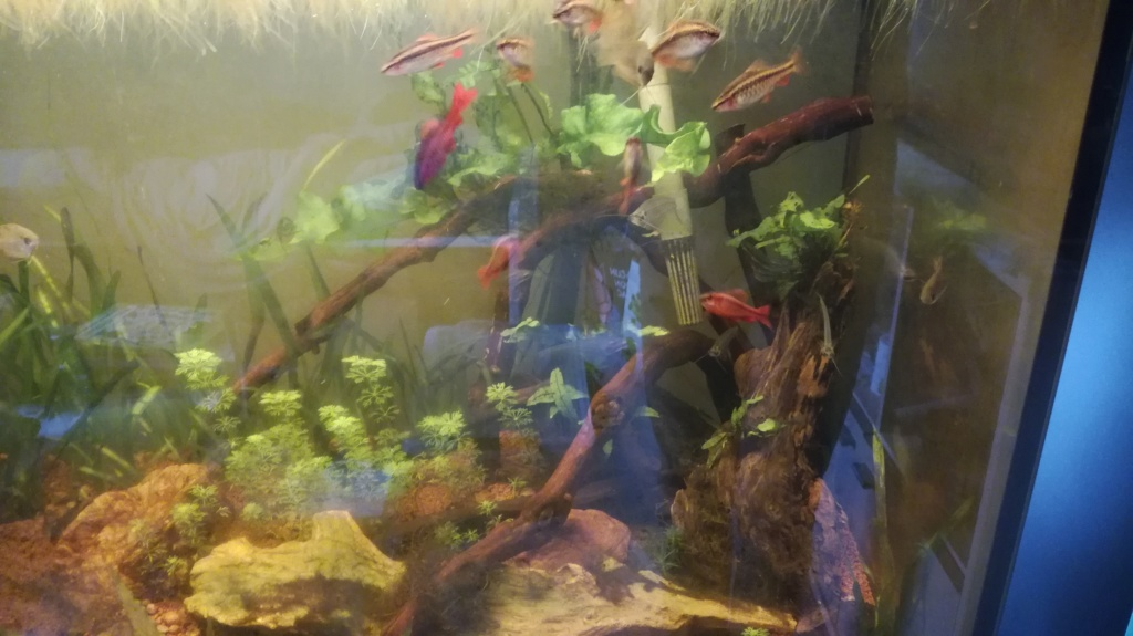 Population aquarium 240l avis Img_2010