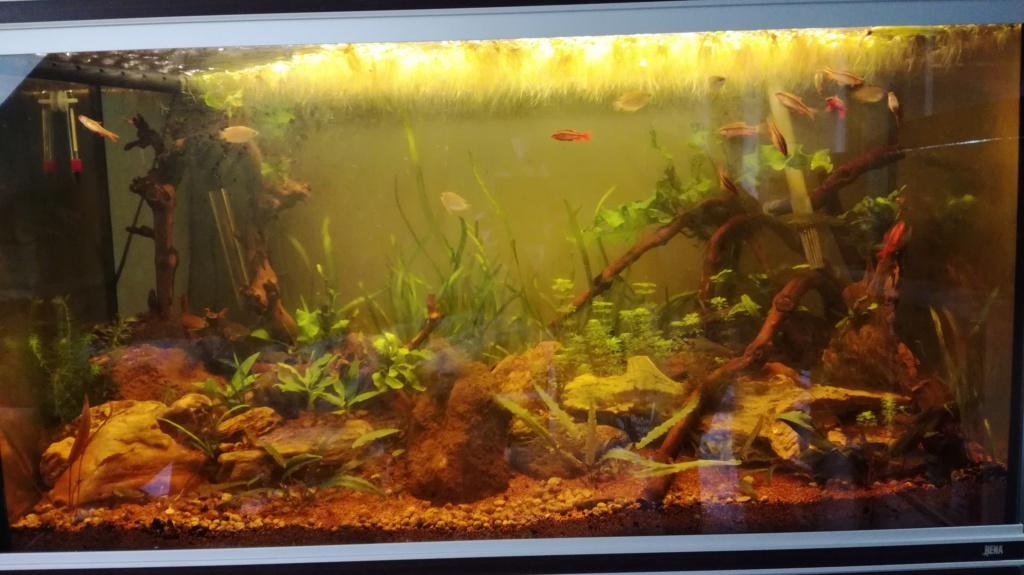 Population aquarium 240l avis Img_2011