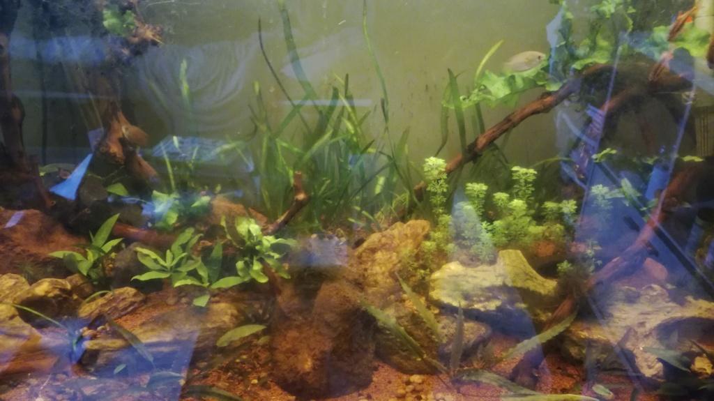 Population aquarium 240l avis Img_2012
