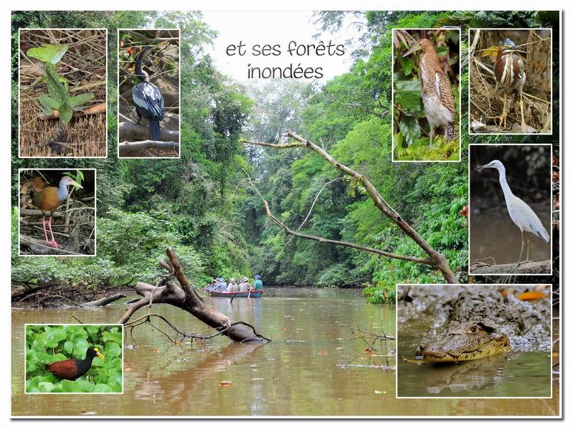 MAJ album Costa Rica sur Picasa Cr-00310