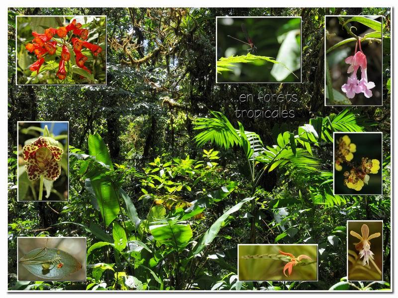 MAJ album Costa Rica sur Picasa Cr-00610
