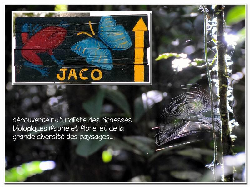 MAJ album Costa Rica sur Picasa Cr-00710