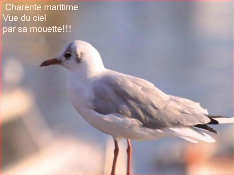 La Charente Maritime vue du ciel Le_17_10