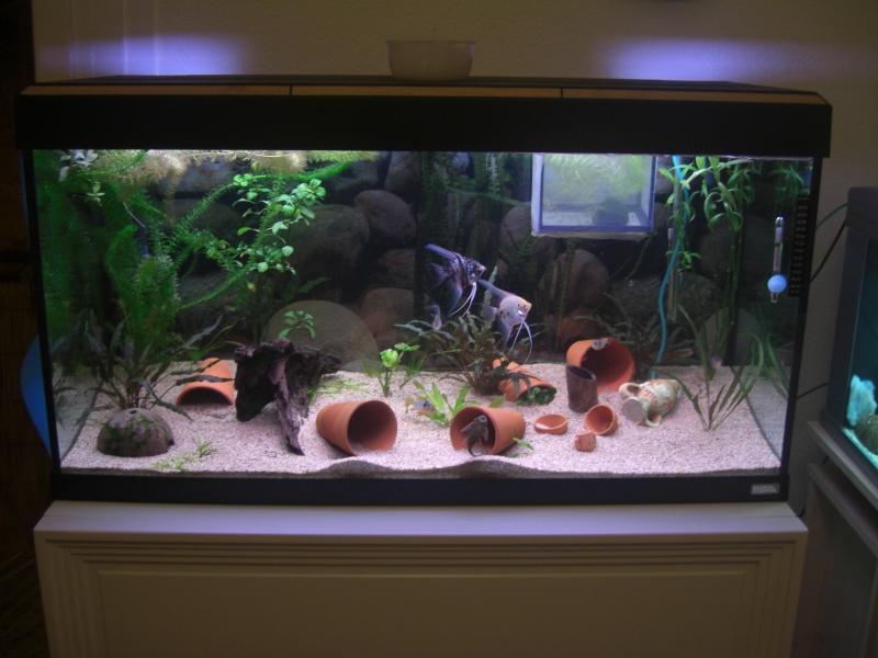 Aquarium  200 litres de zitoum Cimg2210