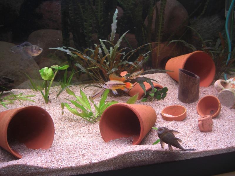 Aquarium  200 litres de zitoum Cimg2310