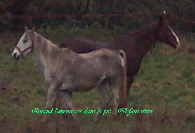 FOREVER (notre mascotte) - Connemara X SF né en 1994 - adopté en novembre 2009 par sophie-france - Page 2 Sans_t10