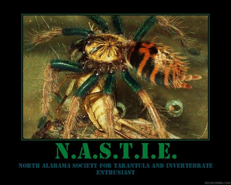 N.A.S.T.I.E. posters Nastie10
